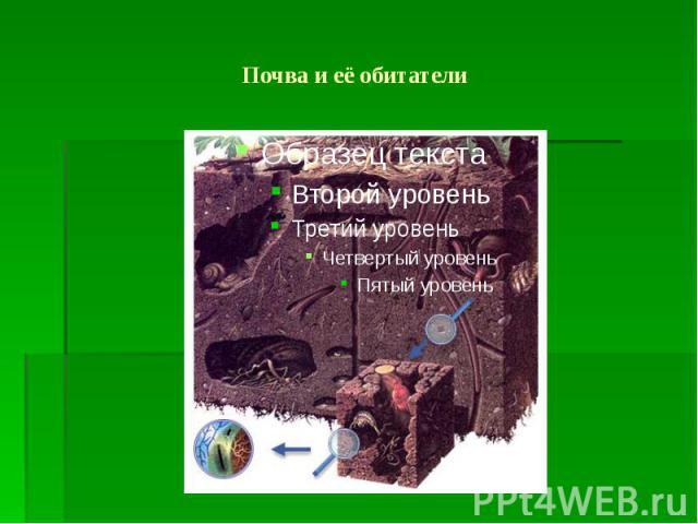 Почва и её обитатели