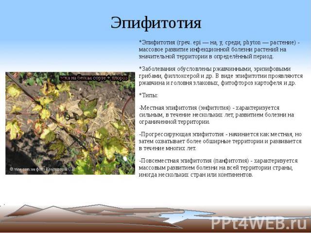Эпифитотия *Эпифитотия (греч. epi — на, у, среди, phyton — растение) - массовое развитие инфекционной болезни растений на значительной территории в определённый период. *Заболевания обусловлены ржавчинными, эризифовыми грибами, филлоксерой и др. В в…