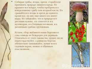 Собирая грибы, ягоды, орехи, старайся не причинять природе лишнего вреда. Не кру