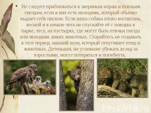 Не следует приближаться к звериным норам и птичьим гнездам, если в них есть моло