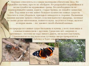Бережно относитесь и к самым маленьким обитателям леса. Не обрывайте паутины, пр