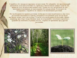 Старайтесь без нужды не нарушать лесную почву. Не забывайте, что проезжающий авт