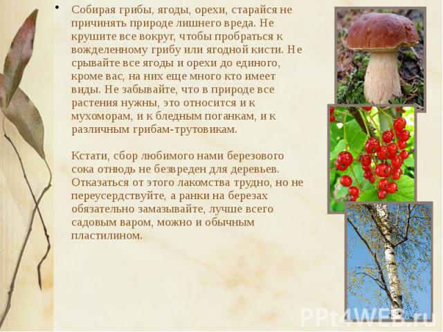 Собирая грибы, ягоды, орехи, старайся не причинять природе лишнего вреда. Не крушите все вокруг, чтобы пробраться к вожделенному грибу или ягодной кисти. Не срывайте все ягоды и орехи до единого, кроме вас, на них еще много кто имеет виды. Не забыва…