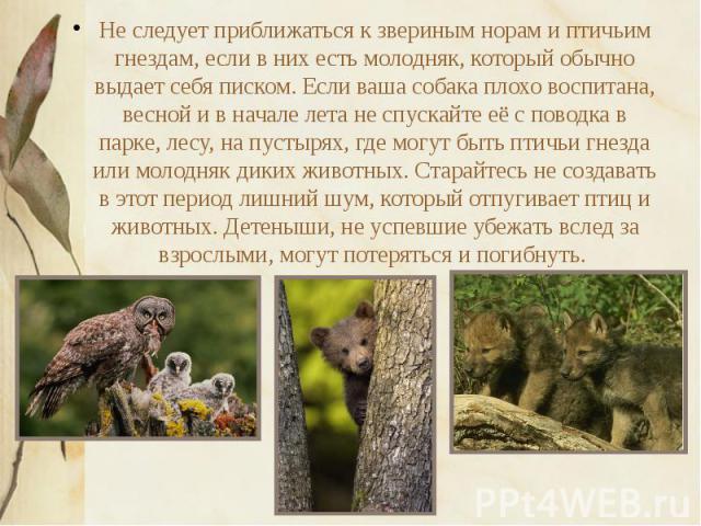 Не следует приближаться к звериным норам и птичьим гнездам, если в них есть молодняк, который обычно выдает себя писком. Если ваша собака плохо воспитана, весной и в начале лета не спускайте её с поводка в парке, лесу, на пустырях, где могут быть пт…