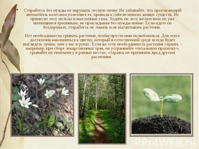 Старайтесь без нужды не нарушать лесную почву. Не забывайте, что проезжающий автомобиль колесами уплотняет ее, приводя к гибели многих живых существ. Не приносят лесу пользы и выхлопные газы. Ходить по лесу желательно по уже имеющимся тропинкам, не …