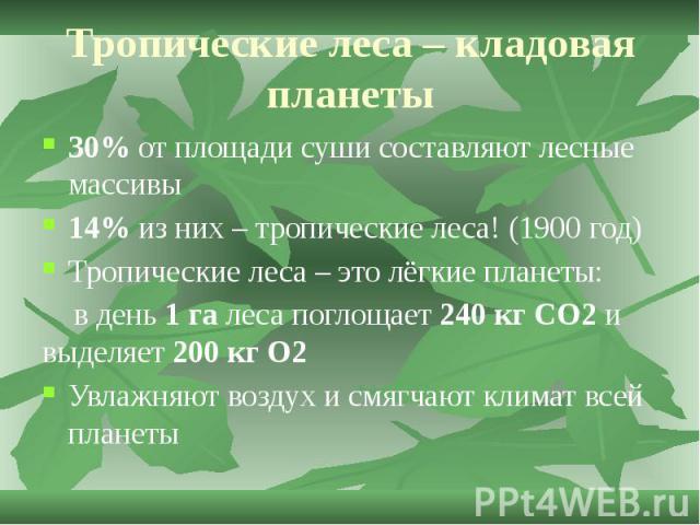 Тропические леса – кладовая планеты 30% от площади суши составляют лесные массивы 14% из них – тропические леса! (1900 год) Тропические леса – это лёгкие планеты: в день 1 га леса поглощает 240 кг CO2 и выделяет 200 кг О2 Увлажняют воздух и смягчают…