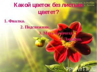 Какой цветок без листьев цветет? 1. Фиалка. 2. Подснежник. 3. Мать-и-мачеха. 4.