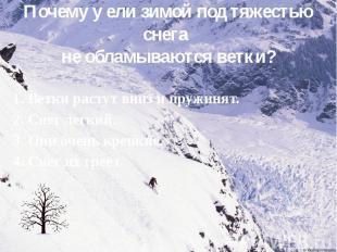 Почему у ели зимой под тяжестью снега не обламываются ветки? 1. Ветки растут вни