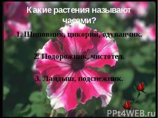 Какие растения называют часами? 1. Шиповник, цикорий, одуванчик. 2. Подорожник,