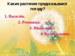 Какие растения предсказывают погоду? 1. Василёк. 2. Ромашка. 3. Иван-чай. 4. Кол