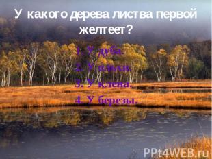 У какого дерева листва первой желтеет? 1. У дуба. 2. У ольхи. 3. У клена. 4. У б