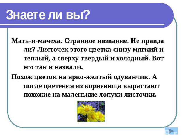 Знаете ли вы? Мать-и-мачеха. Странное название. Не правда ли? Листочек этого цветка снизу мягкий и теплый, а сверху твердый и холодный. Вот его так и назвали. Похож цветок на ярко-желтый одуванчик. А после цветения из корневища вырастают похожие на …