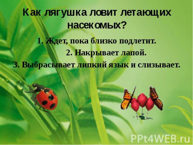 Как лягушка ловит летающих насекомых? 1. Ждет, пока близко подлетит. 2. Накрывает лапой. 3. Выбрасывает липкий язык и слизывает.