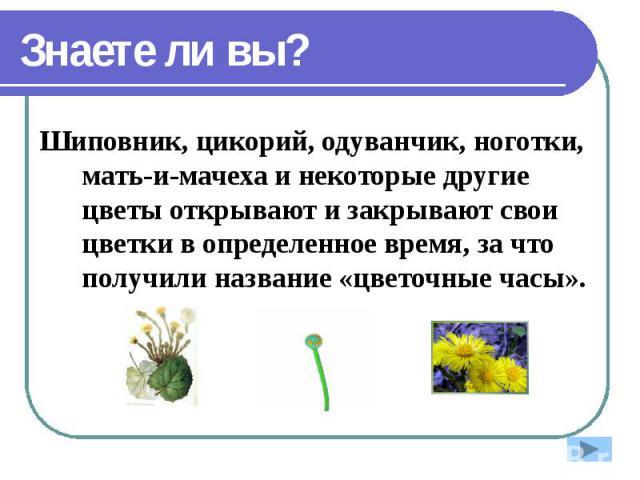 Знаете ли вы? Шиповник, цикорий, одуванчик, ноготки, мать-и-мачеха и некоторые другие цветы открывают и закрывают свои цветки в определенное время, за что получили название «цветочные часы».