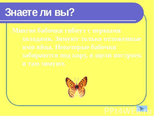 Знаете ли вы? Многие бабочки гибнут с первыми холодами. Зимуют только отложенные ими яйца. Некоторые бабочки забираются под кору, в щели построек и там зимуют.