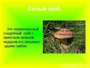 Белый гриб. Это первоклассный съедобный гриб с приятным запахом, недаром его наз