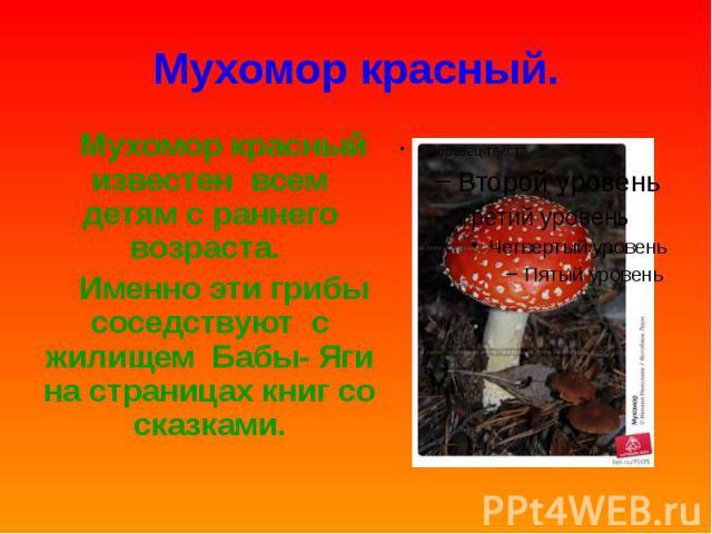Мухомор красный. Мухомор красный известен всем детям с раннего возраста. Именно эти грибы соседствуют с жилищем Бабы- Яги на страницах книг со сказками.