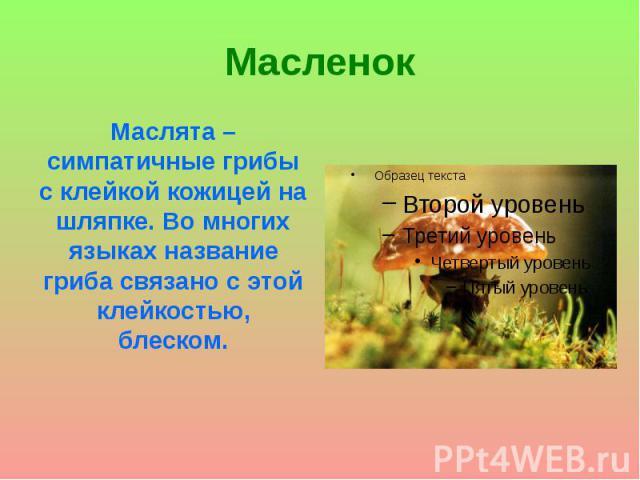Масленок Маслята – симпатичные грибы с клейкой кожицей на шляпке. Во многих языках название гриба связано с этой клейкостью, блеском.