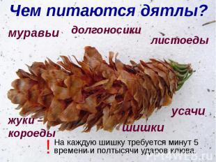 Чем питаются дятлы?