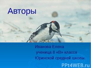 Авторы Иванова Елена ученица 8 «В» класса Юринской средней школы.