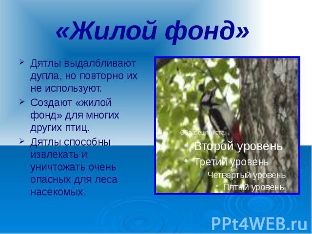 «Жилой фонд» Дятлы выдалбливают дупла, но повторно их не используют. Создают «жилой фонд» для многих других птиц. Дятлы способны извлекать и уничтожать очень опасных для леса насекомых.