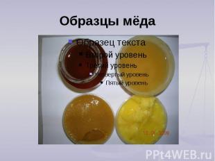 Образцы мёда