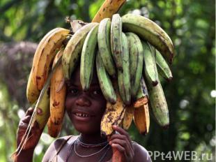 Народы зоны экваториальных лесов - пигмеи - малорослы (ниже 150 см). Цвет кожи у