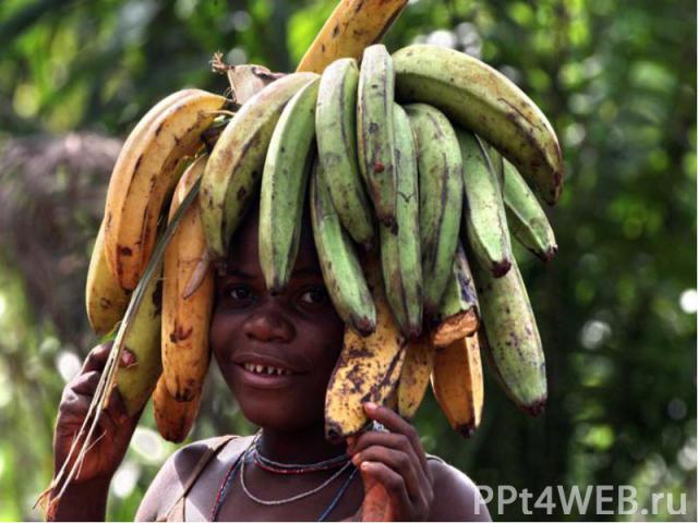 Народы зоны экваториальных лесов - пигмеи - малорослы (ниже 150 см). Цвет кожи у них менее темный, чем у многих других негроидов, губы тонкие, широкий нос, коренастые. Пигмеи - жители лесов. Лес для них - дом и источник всего необходимого для сущест…