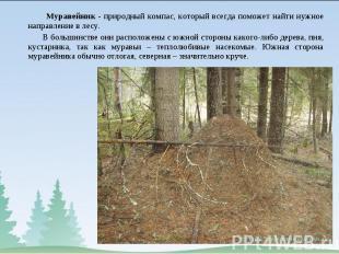 Муравейник - природный компас, который всегда поможет найти нужное направление в