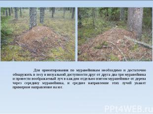 Для ориентирования по муравейникам необходимо и достаточно обнаружить в лесу в в
