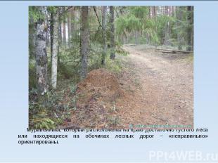 Муравейники, который расположены на краю достаточно густого леса или находящиеся
