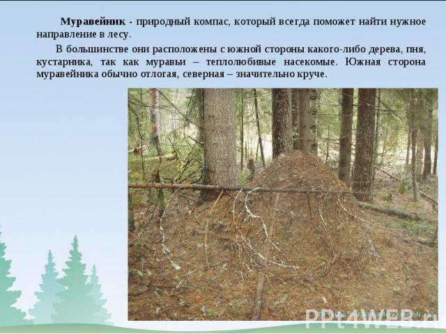 Муравейник - природный компас, который всегда поможет найти нужное направление в лесу. Муравейник - природный компас, который всегда поможет найти нужное направление в лесу. В большинстве они расположены с южной стороны какого-либо дерева, пня, куст…