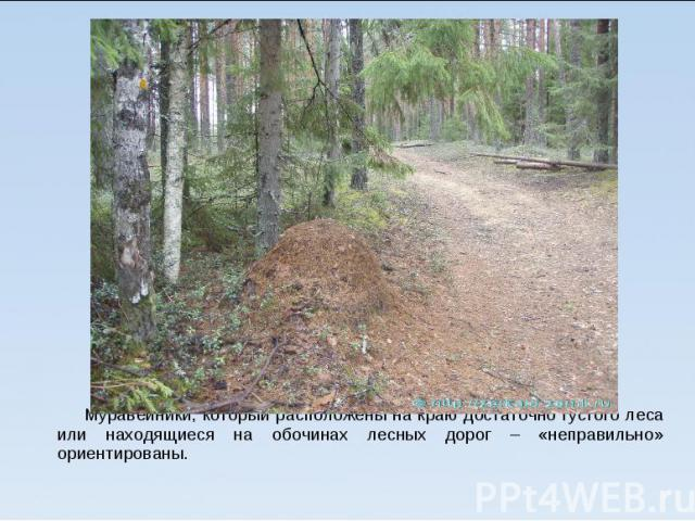 Муравейники, который расположены на краю достаточно густого леса или находящиеся на обочинах лесных дорог – «неправильно» ориентированы.