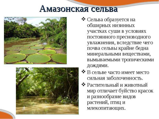 Сельва образуется на обширных низинных участках суши в условиях постоянного пресноводного увлажнения, вследствие чего почва сельвы крайне бедна минеральными веществами, вымываемыми тропическими дождями. Сельва образуется на обширных низинных участка…