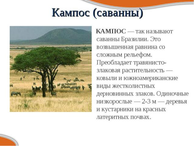 КАМПОС — так называют саванны Бразилии. Это возвышенная равнина со сложным рельефом. Преобладает травянисто-злаковая растительность — ковыли и южноамериканские виды жестколистных дерновинных злаков. Одиночные низкорослые — 2-3 м — деревья и кустарни…