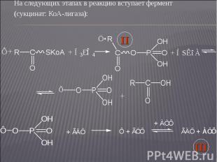 На следующих этапах в реакцию вступает фермент На следующих этапах в реакцию вст