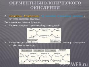 Анаэробные дегидрогеназы (не способны использовать кислород в качестве акцептора
