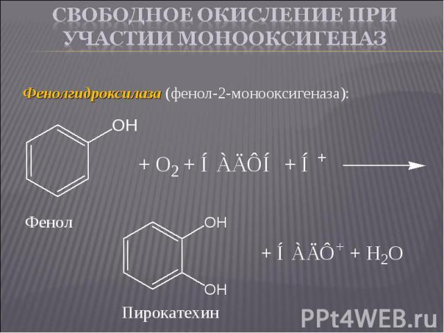 Фенолгидроксилаза (фенол-2-монооксигеназа): Фенолгидроксилаза (фенол-2-монооксигеназа):