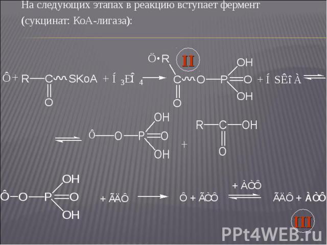 На следующих этапах в реакцию вступает фермент На следующих этапах в реакцию вступает фермент (сукцинат: КоА-лигаза):