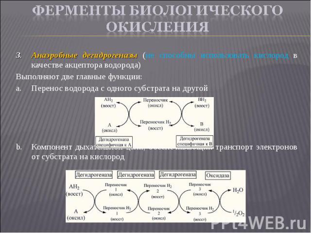 Анаэробные дегидрогеназы (не способны использовать кислород в качестве акцептора водорода) Анаэробные дегидрогеназы (не способны использовать кислород в качестве акцептора водорода) Выполняют две главные функции: Перенос водорода с одного субстрата …