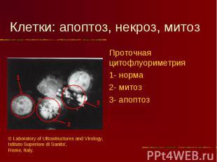 Проточная цитофлуориметрия Проточная цитофлуориметрия 1- норма 2- митоз 3- апопт