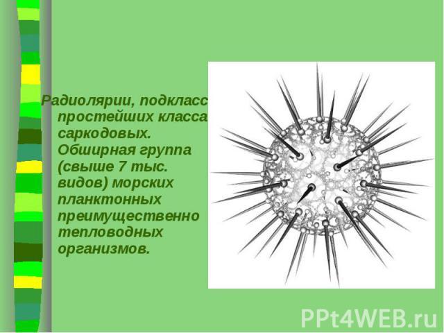 Радиолярии, подкласс простейших класса саркодовых. Обширная группа (свыше 7 тыс. видов) морских планктонных преимущественно тепловодных организмов. Радиолярии, подкласс простейших класса саркодовых. Обширная группа (свыше 7 тыс. видов) морских планк…