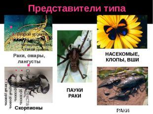 Представители типа Скорпионы