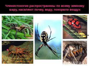 Членистоногие распространены по всему земному шару, населяют почву, воду, покори