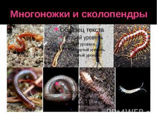 Многоножки и сколопендры