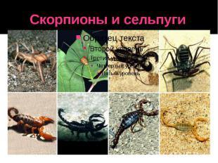 Скорпионы и сельпуги