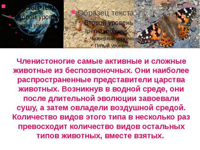Членистоногие самые активные и сложные животные из беспозвоночных. Они наиболее распространенные представители царства животных. Возникнув в водной среде, они после длительной эволюции завоевали сушу, а затем овладели воздушной средой. Количество ви…