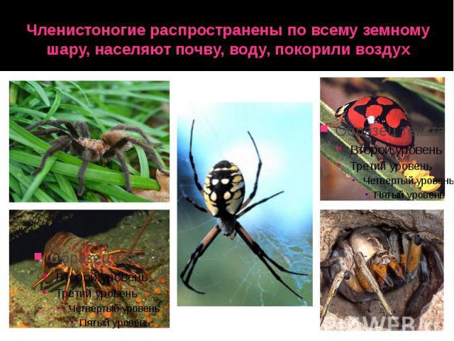 Членистоногие распространены по всему земному шару, населяют почву, воду, покорили воздух