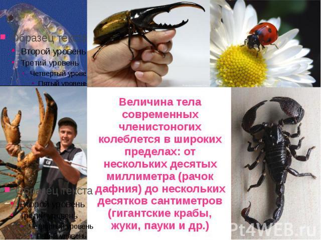 Величина тела современных членистоногих колеблется в широких пределах: от нескольких десятых миллиметра (рачок дафния) до нескольких десятков сантиметров (гигантские крабы, жуки, пауки и др.)