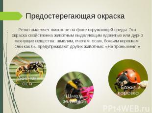 Резко выделяет животное на фоне окружающей среды. Эта окраска свойственна животн